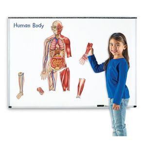 Corpul Uman Magnetic imagine